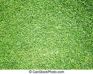 golfe verde, capim, fundo