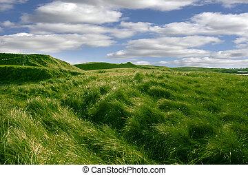golfen, dünenlandschaft, ballybunion, kurs, grün, großes ...
