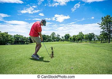 golfer, golfe jogando, com, taco golfe, ligado, fairway