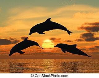 golfinho, amarela, pôr do sol