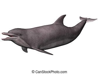 golfinho, branco