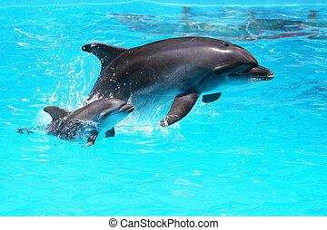 golfinho, com, um, bebê, flutuante, água