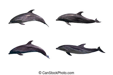 golfinho, isolado