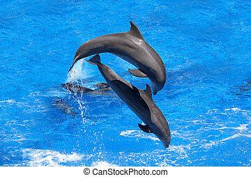 golfinhos, pular