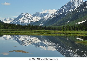 golondrina de mar, alaska, lago