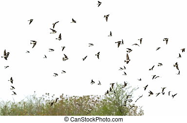 golondrinas, multitud de pájaros, arena, martin