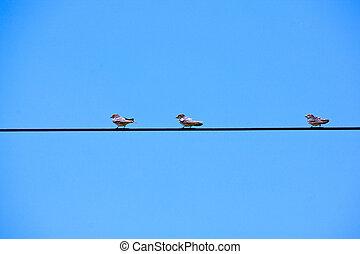golondrinas, perched, en, arriba, energía eléctrica, cable