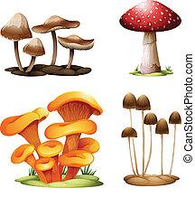 gombák, különböző, fajok