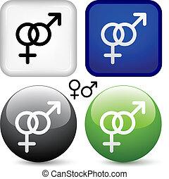 gombok, vektor, hím, női