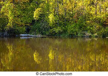 gondolkodások, közül, ősz foliage, alatt, állóvíz