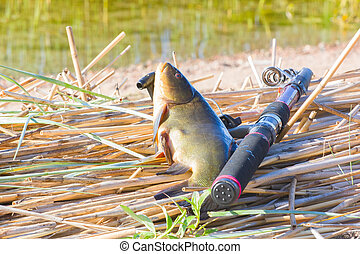 Good catch. Tench is very tasty fish