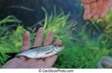 Good luck at fishing