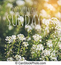 Good morning sunday on blur background greeting card good morning sunday over blur flower background m4hsunfo