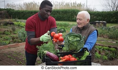Elderly man and adult African-American man talking of the garden plot