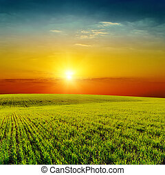 good orange sunset over green spring field