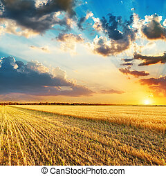 good sunset over fields with crop