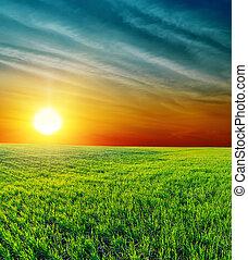 good sunset over green grass
