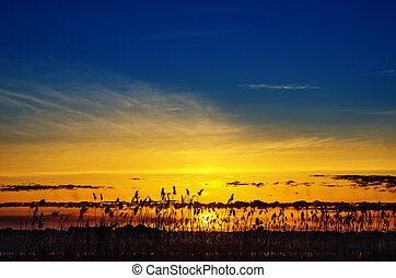 good sunset over river with cane