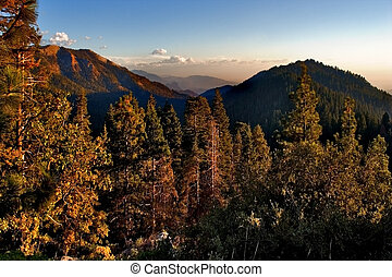 Mountainside and giant trees lit by the sun