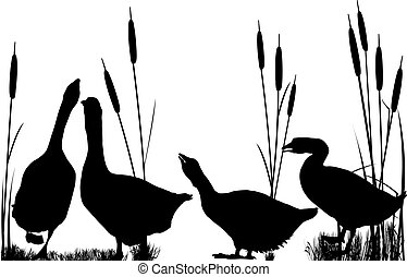 Goose and reeds silhouettes over white background