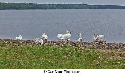 goose bird riverbank river water rural stack waterfowl farm