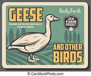 goose birds from farm, retro vector poster - Goose bird on...