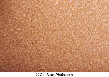 bumps on human skin