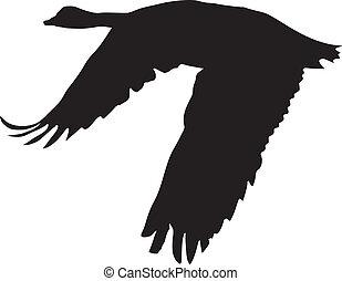 goose - silhouette of goose