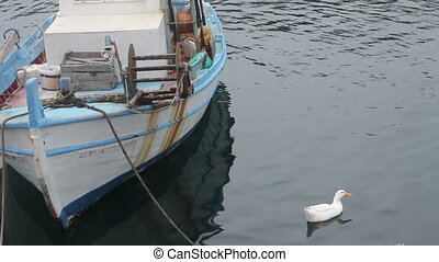 goose near a fishing boat in the bay