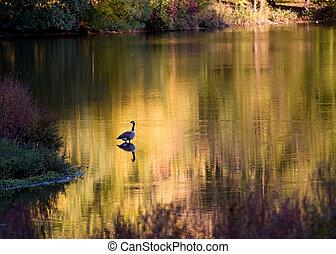Goose on a golden river