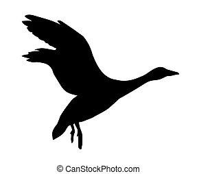 goose on white background