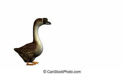 Goose walking on a white background