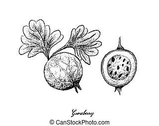 gooseberry, branca, desenhado, fundo, mão