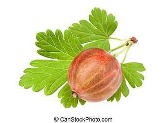 Gooseberry fruit on white