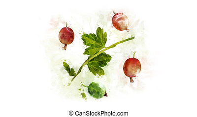 Gooseberry Illustration for the overlay - A beautiful...