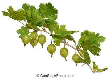 Gooseberry - Isolated green gooseberry