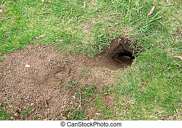 Gopher hole - A gopher hole shows how destructive they can...