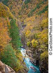 Gorge of mountain river in fall season