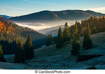 gorgeous autumn landscape in mountains. grassy meadow in...