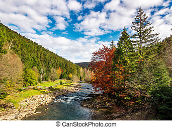 gorgeous autumn landscape in mountains. small river flows...