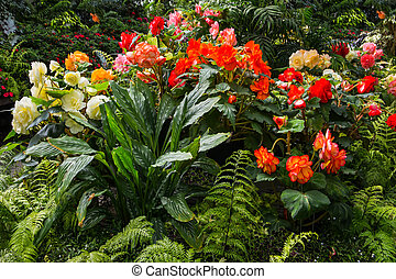 Wonderful greenhouse - Gorgeous colorful tropical flowers. ...