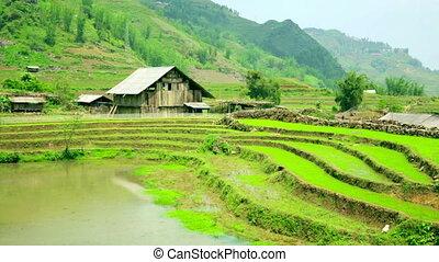 gorgeous farm fields, rice paddy terraces, Sapa, Vietnam