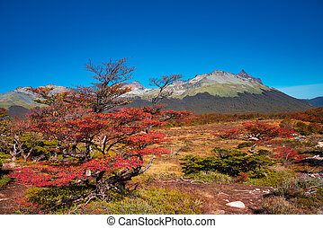 Gorgeous landscape of Patagonia's Tierra del Fuego National ...