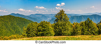gorgeous mountainous panorama with forest in early autumn...