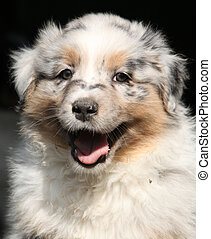 Gorgeous puppy smiling at you