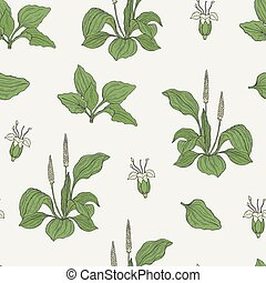 Gorgeous seamless pattern with plantains on light background. Beautiful wild plant with flowers and leaves hand drawn in vintage style. Botanical vector illustration for textile print, wallpaper.