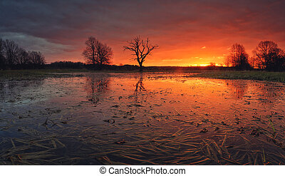 Flooded meadow in the morning