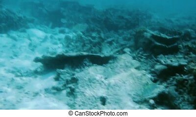 Gorgeous view of underwater world. Snorkeling. Maldives, Indian Ocean. Dead reef corals and beautiful fishes in blue water.