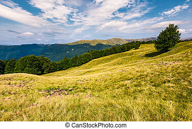gorgeous weather over grassy slopes of Carpathians....