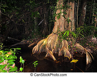 Surinam rainforest at night - Gorgeus Surinam rainforest at...